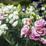 Какие экзотические цветы заказать с доставкой на дом