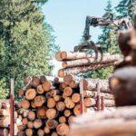 Переваги реалізації лісу на онлайн-аукціонах